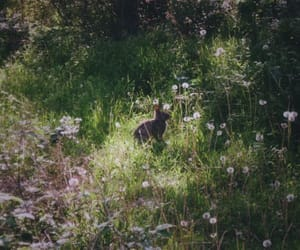 bunny, flowers, and nature image