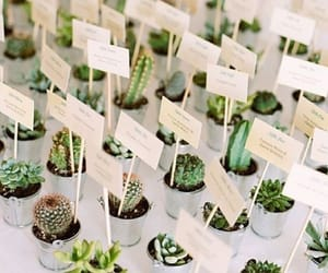 plants, succulents, and wedding image