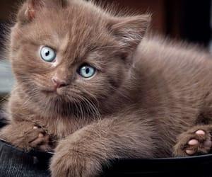 animal, beautiful, and brown image