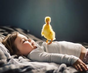 baby, animal, and duck image