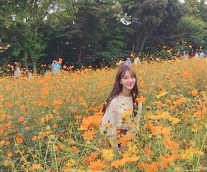 flowers, korean, and nature image