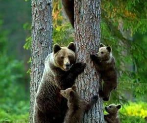 bear, family, and animal image