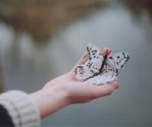 butterfly, photography, and vintage image