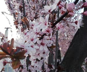 aesthetic, bloom, and blossom image