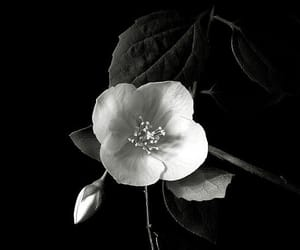 black and white, pale, and flowers image