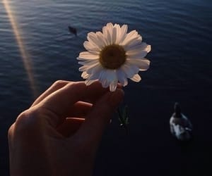flowers, tumblr, and sea image