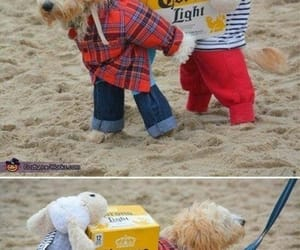 animals, dogs, and funny image