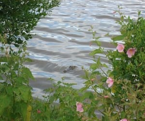 water, aesthetic, and flowers image