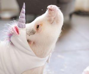 unicorn, pig, and animal image