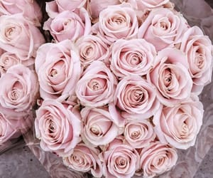bouquet, pink roses, and flower image