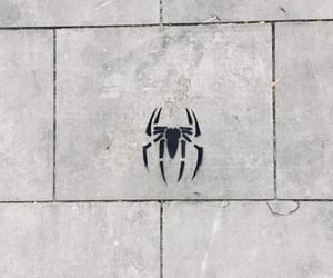 black, spider, and white image