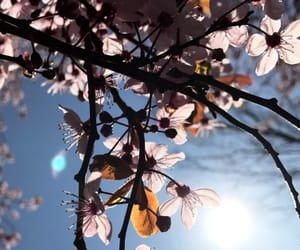 spring, sun, and goodlife image