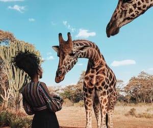 giraffe, animal, and travel image