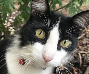 Animais, animals, and cat image