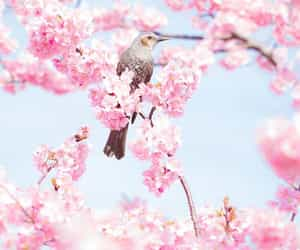 flowers, spring, and bird image
