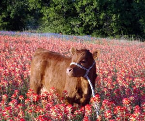 adventure, animal, and cow image