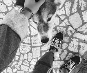black and white, dog, and old skool image