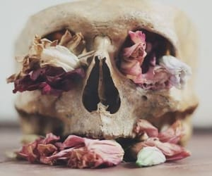 article, skull, and wordsofwisdom image