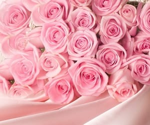 bouquet, rose, and botanical image