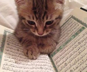 cat, animal, and islam image