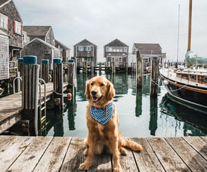 animals, dock, and boats image