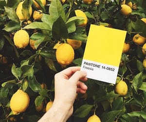 colorful, yellow, and pantone image