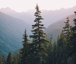 beautiful, travel, and trees image