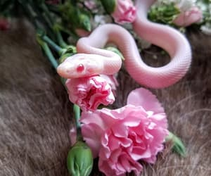 animal, pink, and snake image