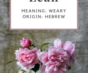 hebrew, quotes, and text image