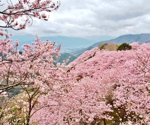 cherry blossom, japan, and mountains image