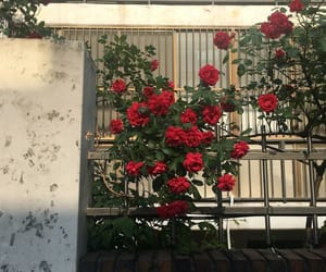 balcony, red, and roses image