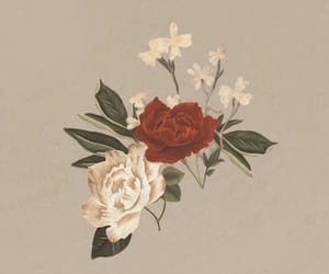 flowers, shawn mendes, and rose image