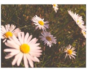 aesthetic, daisy, and grunge image