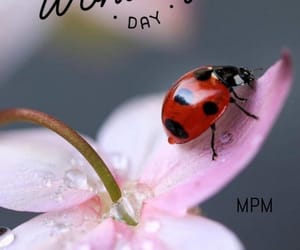 flower, summer, and lady bug image