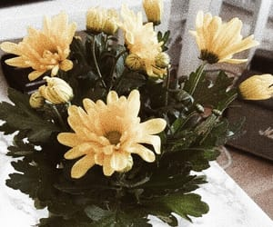flowers, spring, and yellow image