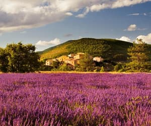 colors, flowers, and france image