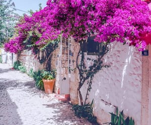 beautiful, city, and flower image