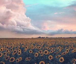 sky, flowers, and sunflower image