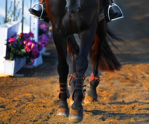 country living, riding, and equestrian image