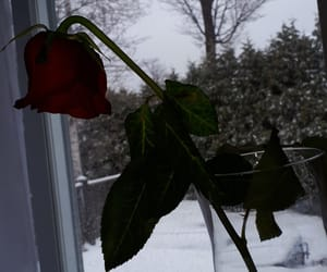 cold, flower, and flowers image