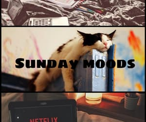 cat, mood, and movies image