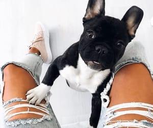 dog, shoes, and fashion image