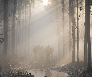 forest, photography, and people image