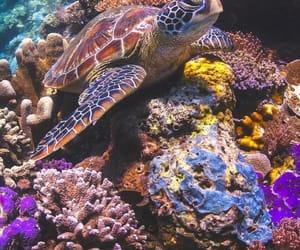 sea, animal, and nature image
