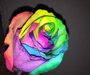 colors, photo, and rainbow image