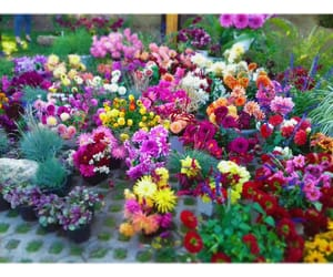beauty, colorful, and flowers image