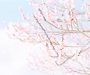 sakura, flowers, and pastel image