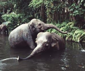 animals, couple, and elephant image