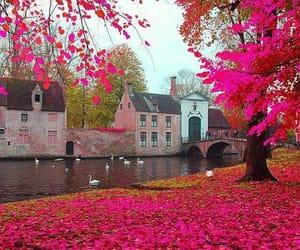 pink, belgium, and nature image