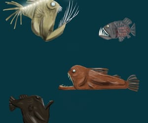 art, fish, and fishes image